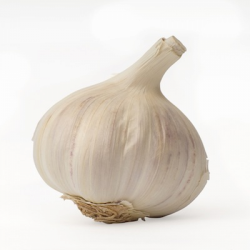 Image of the Garlic