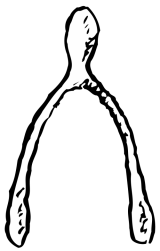 Image of the Wishbone