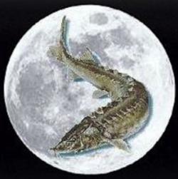 Salmon (zodiac)