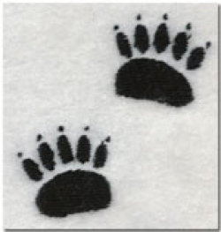 Bear tracks