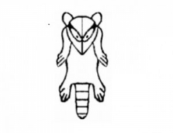 Raccoon Symbol