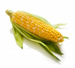 Maize (Corn)