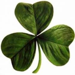 Shamrock (clover)