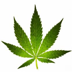hemp \ cannabis