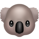 Koala (Apple iOS 12.2)