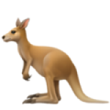 Kangaroo (Apple iOS 12.2)