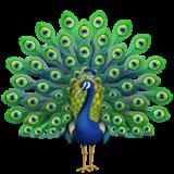 Peacock (Apple iOS 12.2)
